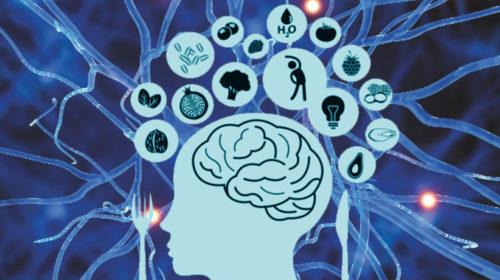 Protege tu cerebro para una mejor calidad de vida