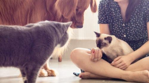 Adoptar una mascota te hace feliz y saludable