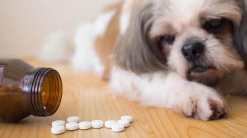 Añade omega-3 para tu mascota
