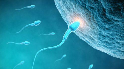 Los probióticos pueden influir en la fertilidad