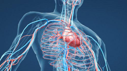 La salud del sistema circulatorio